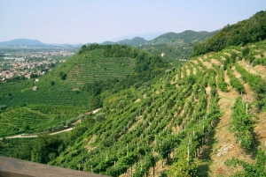 Valdobbiadene Prosecco Wine Tour
